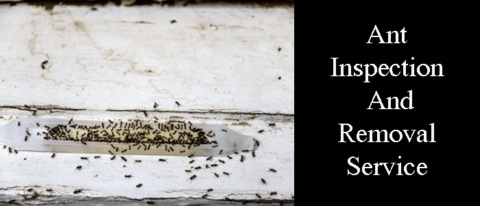 Ant Control Services