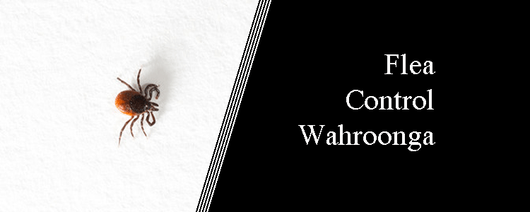 Flea Control Wahroonga